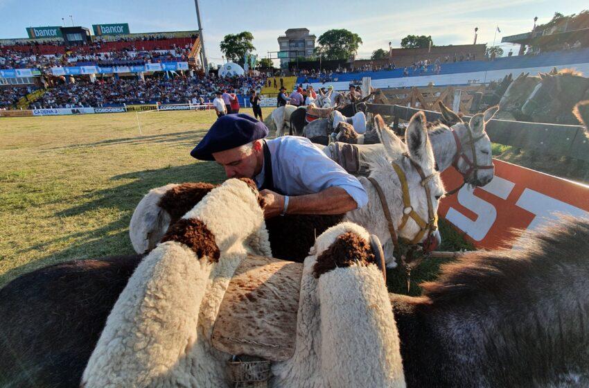 Protesta del campo: otro día sin ganado en Liniers y un sector quiere ir a las rutas