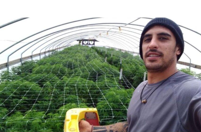 El boom de los cordobeses que cosechan marihuana en California